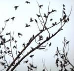 Birds in Flight, 03/2012
